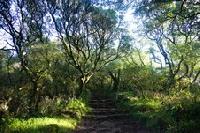 Die magischen Wälder der barfüßigen Mönche
